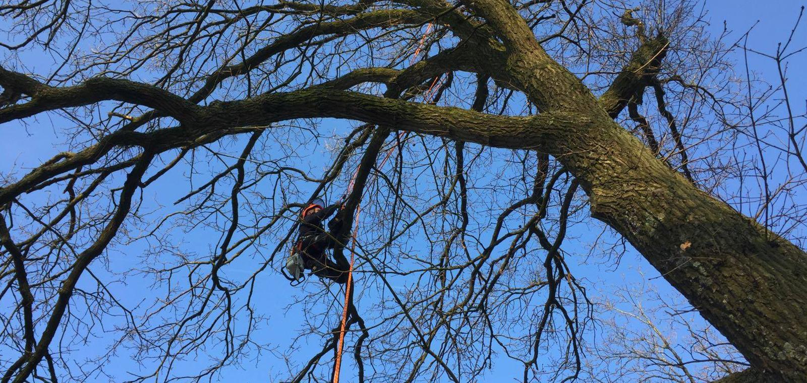 Bomen kappen: een vak apart